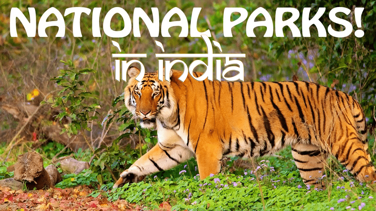 national-parks-in-india